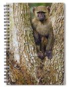 Olive Baboon Juvenile Kibale Np Uganda Spiral Notebook