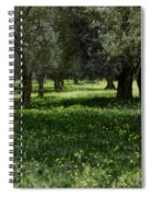 Olive Grove Color Italy Spiral Notebook