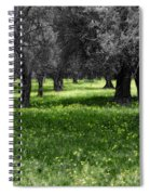 Olive Grove Italy Cbw Spiral Notebook