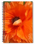 Olympia Orange Poppy Spiral Notebook
