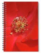 Olympiad Hybrid Spiral Notebook