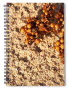 On The Beach 07 Spiral Notebook