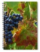 On The Vine Spiral Notebook