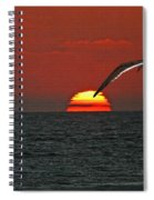 One Black Skimmers At Sunset Spiral Notebook