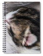 One Day Old Kitten Breastfeeding Spiral Notebook
