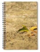 One Fallen Spiral Notebook
