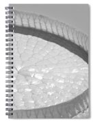 One Huge Lily Pad #3b Spiral Notebook