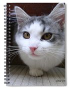 One Legged Kitty Spiral Notebook