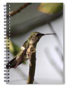 One Out Of Place - Hummingbird Spiral Notebook
