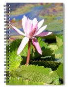 One Pink Water Lily Spiral Notebook