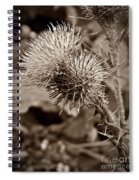 One Sepia Spiral Notebook