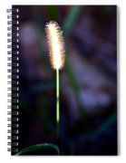 One Sunlit Candle Spiral Notebook