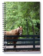 One Very Pretty Hilton Head Island Horse Spiral Notebook