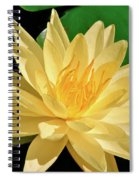 One Water Lily  Spiral Notebook