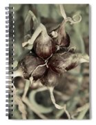 Onion Seed Heads Spiral Notebook