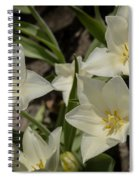 Open Tulip Time Spiral Notebook