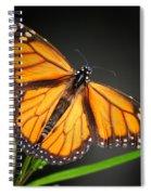 Open Wings Monarch Butterfly Spiral Notebook