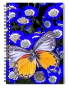 Orange And Gray Butterfly Spiral Notebook