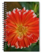 Orange And White Spiral Notebook