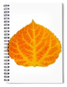 Orange And Yellow Aspen Leaf 3 Spiral Notebook