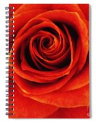 Orange Apricot Rose Macro With Oil Painting Effect Spiral Notebook