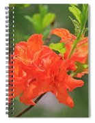 Orange Azalea At Moore State Park Spiral Notebook