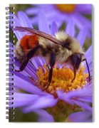 Orange-banded Bee Spiral Notebook