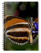 Orange Banded Butterfly Spiral Notebook
