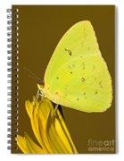 Orange Barred Sulfur Butterfly Spiral Notebook