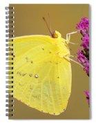 Orange-barred Sulphur Spiral Notebook