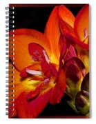 Orange Beauty Spiral Notebook