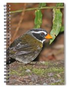 Orange-billed Sparrow Spiral Notebook