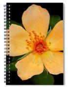 Orange Blossom Spiral Notebook