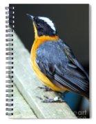 Orange Breasted Bird Portrait Spiral Notebook