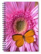 Orange Butterfly On Pink Daisy Spiral Notebook