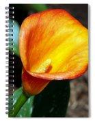 Orange Calla Lilly Flower In The Garden Spiral Notebook
