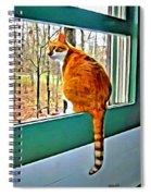 Orange Cat In Window Spiral Notebook