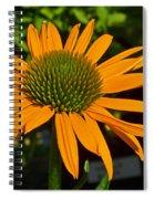 Orange Cone Flower Spiral Notebook