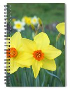 Orange Daffodils Flowers Spring Garden Spiral Notebook
