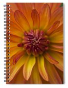 Orange Dahlia Blossom Spiral Notebook