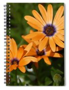 Orange Daisy Spiral Notebook