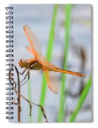 Orange Dragonfly On The Water's Edge Spiral Notebook