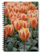 Orange Dutch Tulips Spiral Notebook