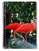 Orange Feathered Friends Spiral Notebook