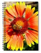 Orange Fiery Gaillardia Flower And Bee Macro Spiral Notebook