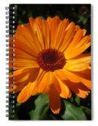 Orange Flower In The Garden Spiral Notebook