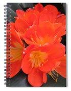 Bright Orange Flowers Spiral Notebook