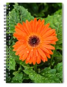 Orange Gerber Daisy 2 Spiral Notebook