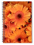 Orange Gerbera Daisies Spiral Notebook