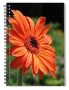 Orange Gerbera Daisy Spiral Notebook